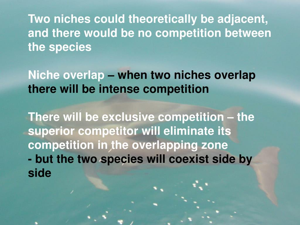 Two niches could theoretically be adjacent, and there would be no competition between the species