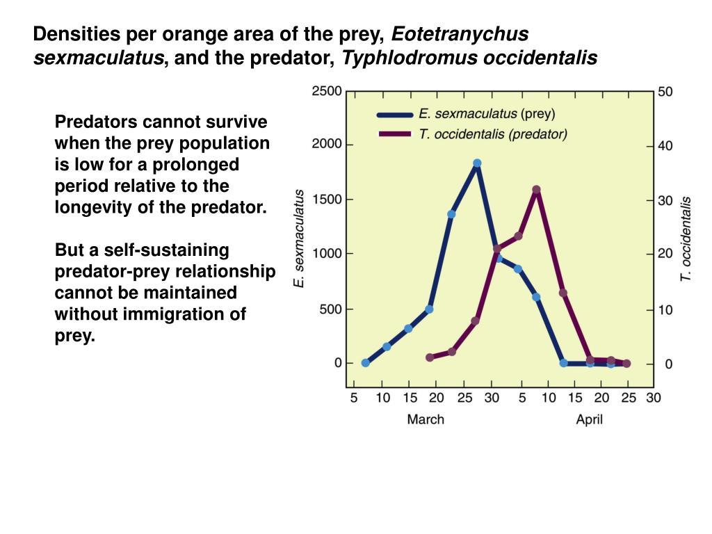 Densities per orange area of the prey,