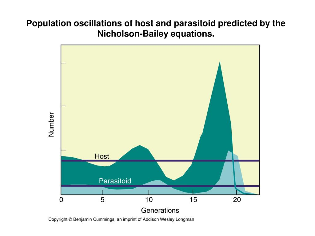 Population oscillations of host and parasitoid predicted by the Nicholson-Bailey equations.