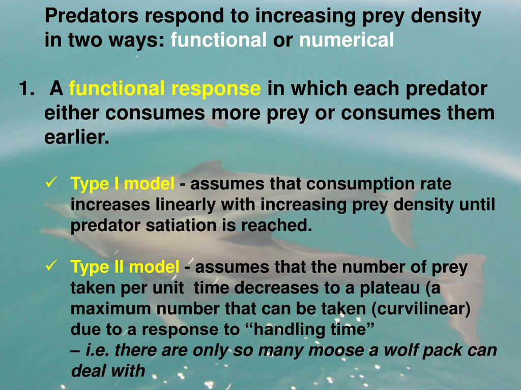 Predators respond to increasing prey density in two ways: