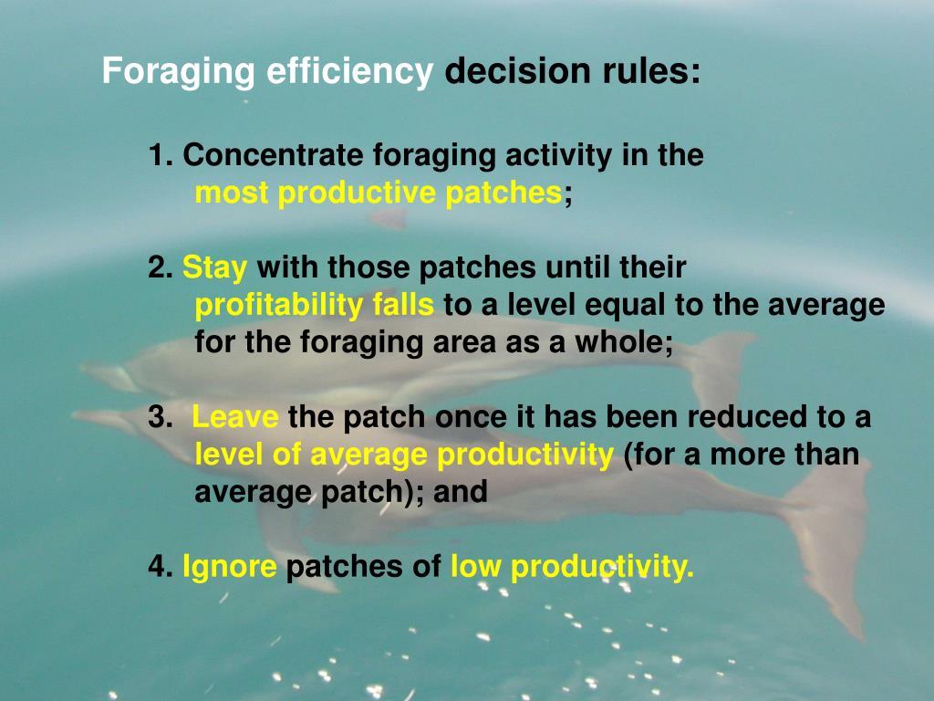 Foraging efficiency