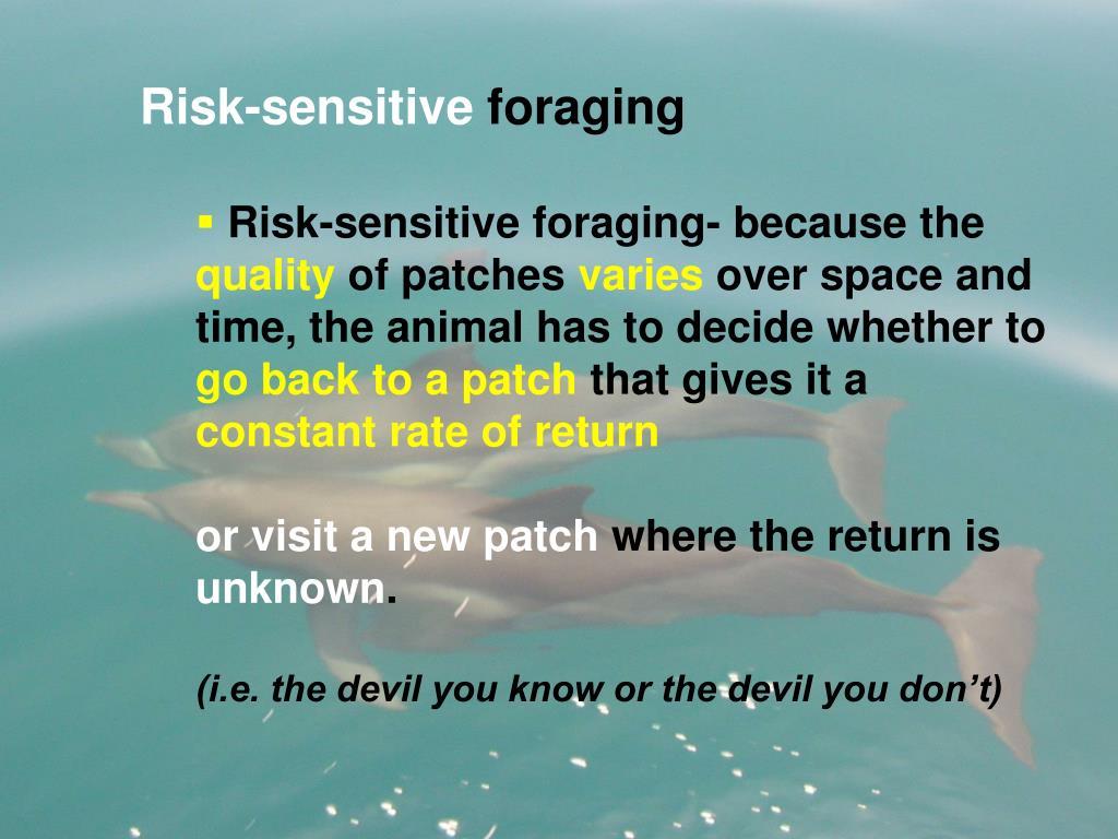 Risk-sensitive