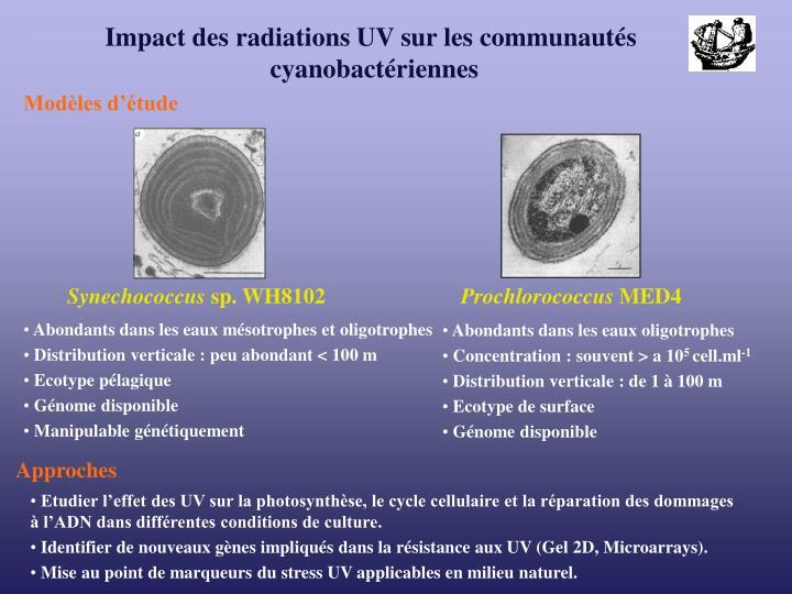Impact des radiations UV sur les communautés