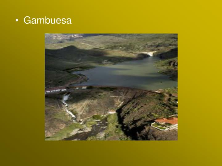 Gambuesa