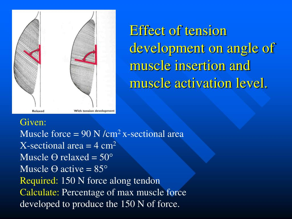 Effect of tension development on angle of muscle insertion and muscle activation level.