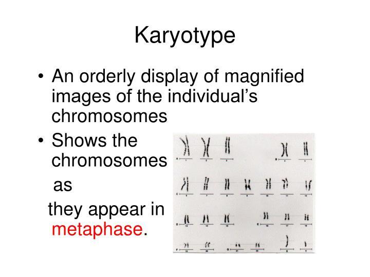 Karyotype