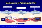 mechanisms of pathology for pah