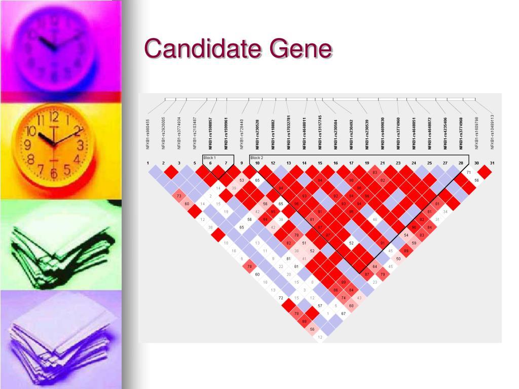 Candidate Gene