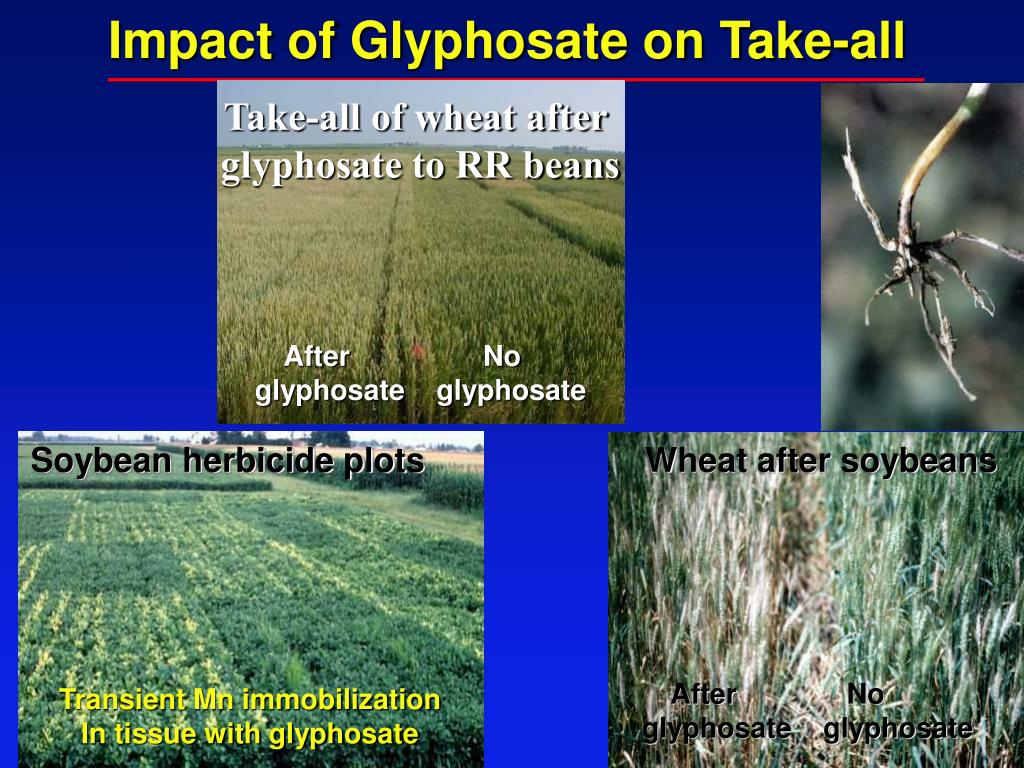Impact of Glyphosate on Take-all