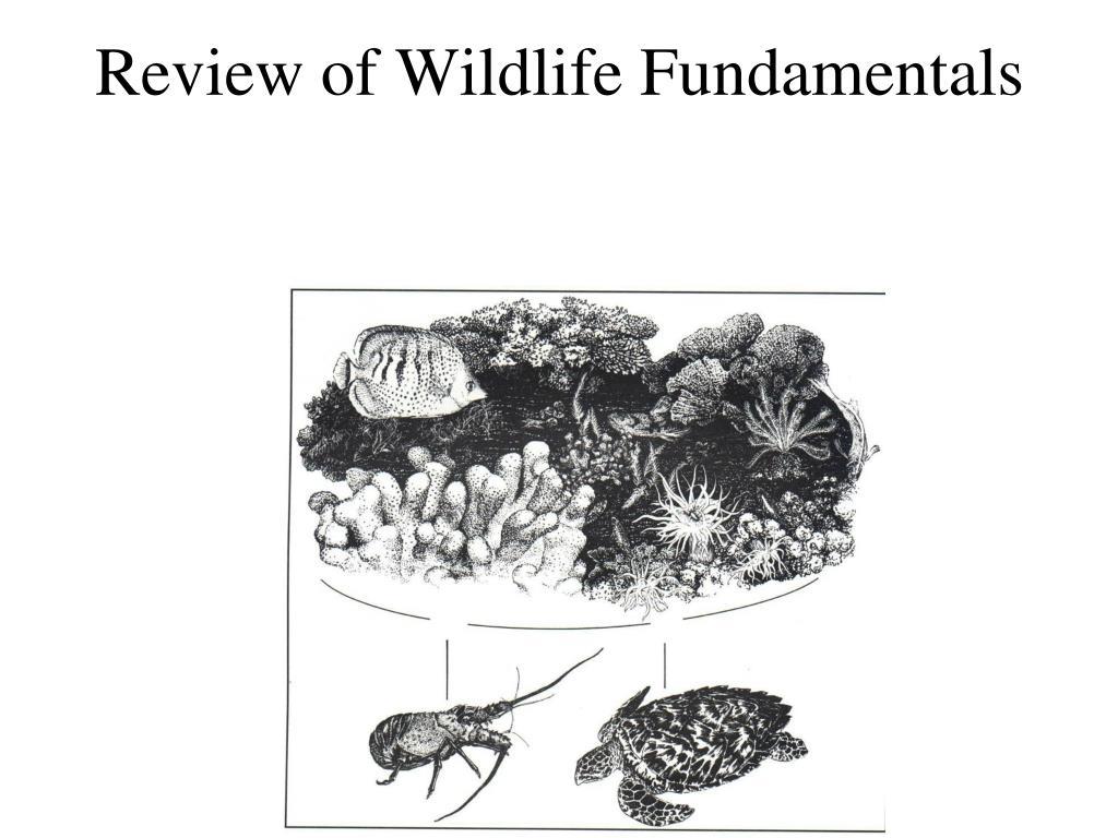 Review of Wildlife Fundamentals