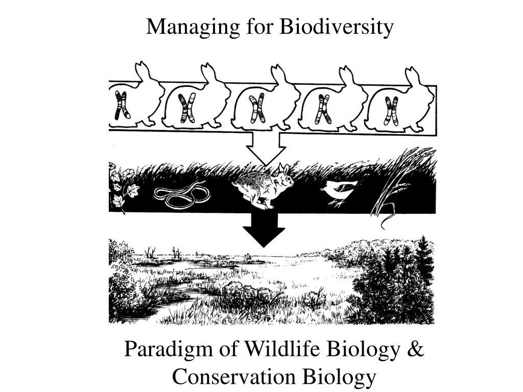 Managing for Biodiversity