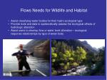 flows needs for wildlife and habitat