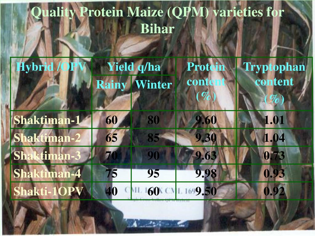 Quality Protein Maize (QPM) varieties for Bihar