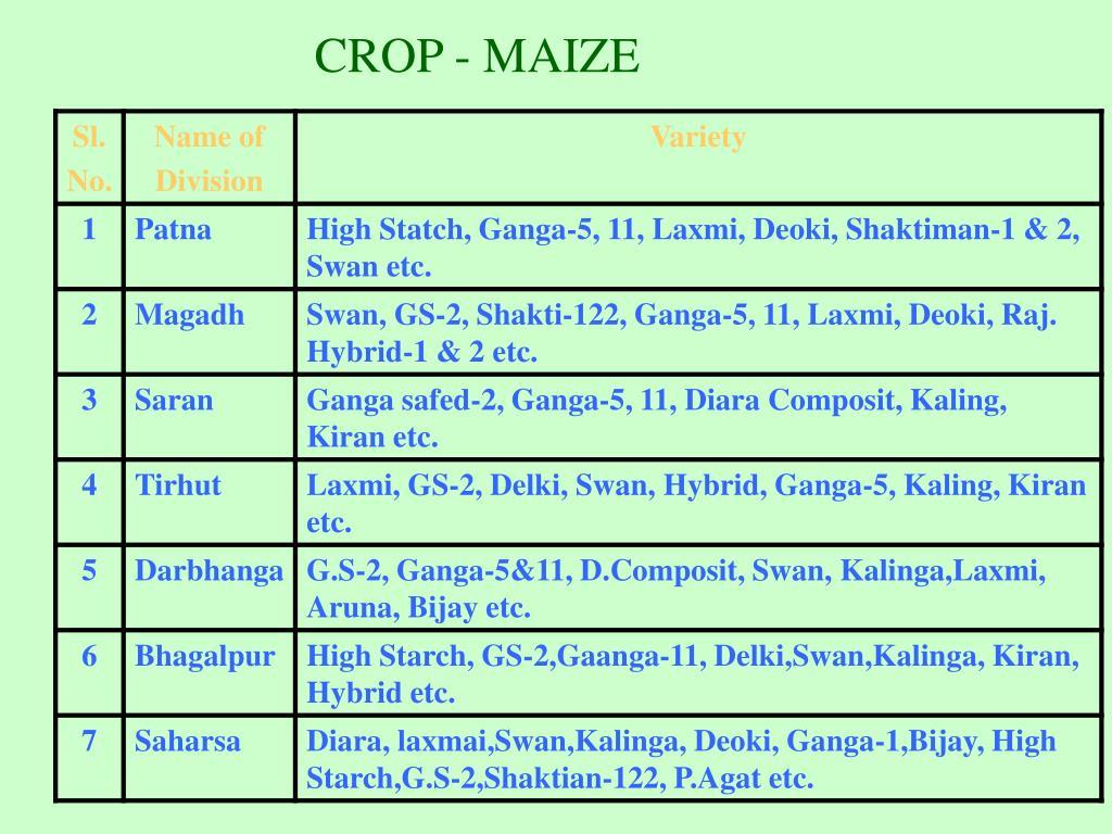 CROP - MAIZE