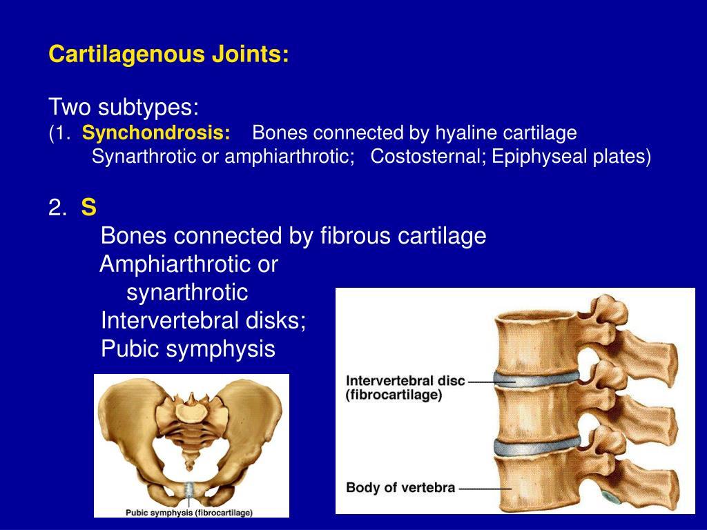 Cartilagenous Joints: