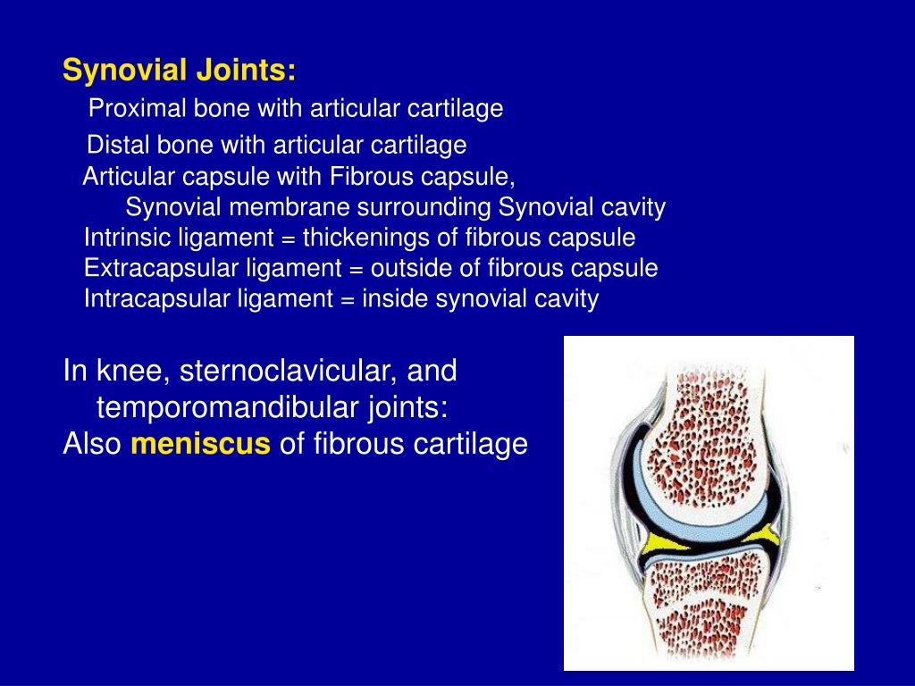 Synovial Joints: