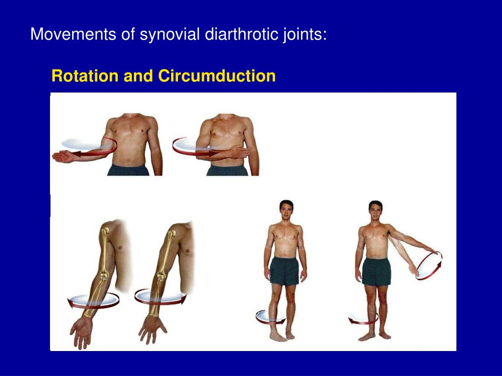 Movements of synovial diarthrotic joints: