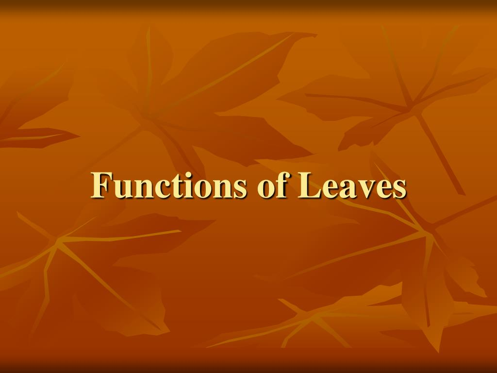 Functions of Leaves