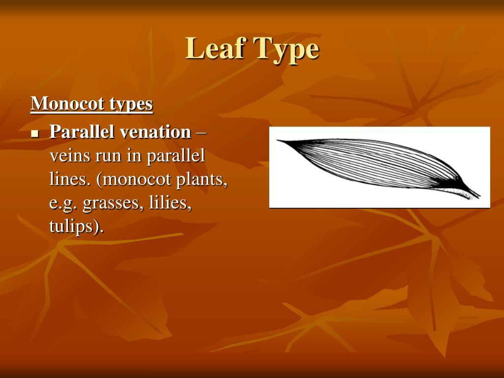 Monocot types