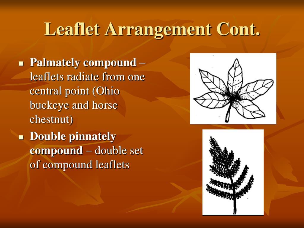 Palmately compound