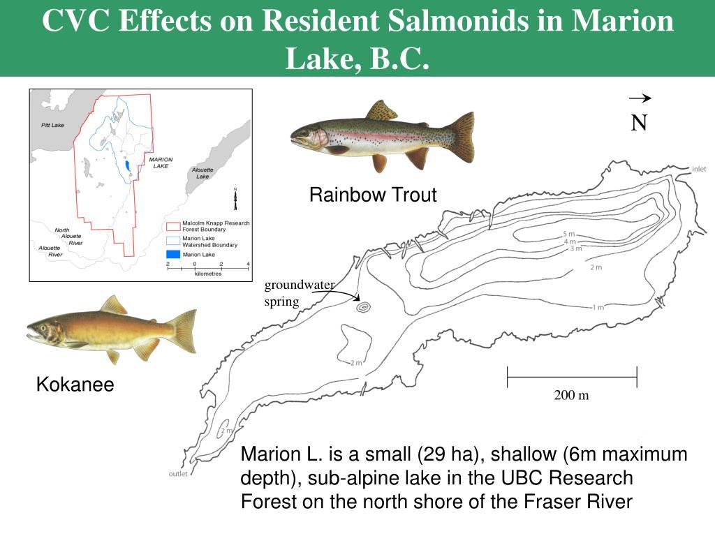 CVC Effects on Resident Salmonids in Marion Lake, B.C.