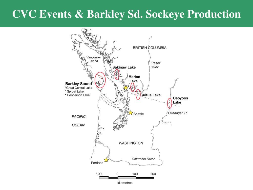 CVC Events & Barkley Sd. Sockeye Production