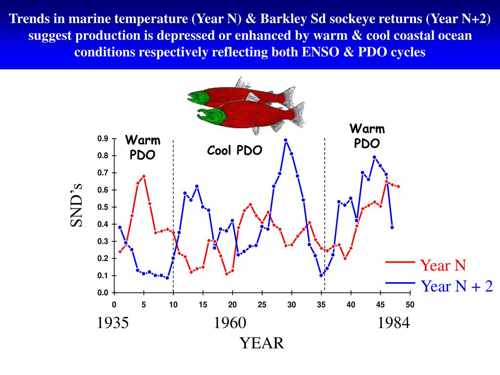 Trends in marine temperature (Year N) & Barkley Sd sockeye returns (Year N+2) suggest production is depressed or enhanced by warm & cool coastal ocean conditions respectively reflecting both ENSO & PDO cycles