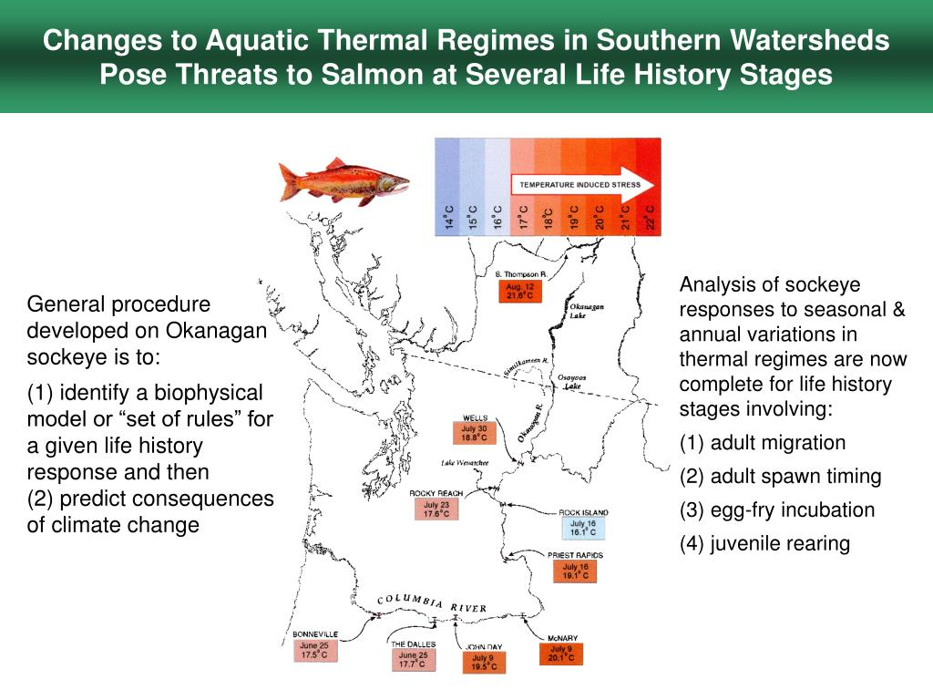 Changes to Aquatic Thermal Regimes in Southern Watersheds Pose Threats to Salmon at Several Life History Stages