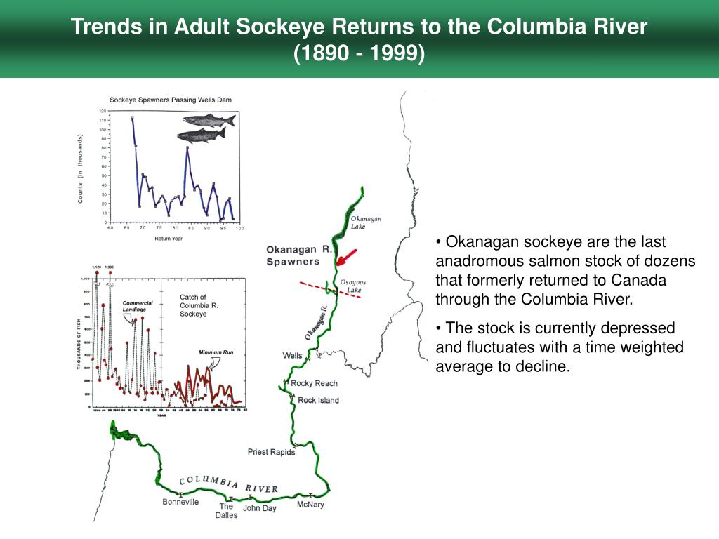 Trends in Adult Sockeye Returns to the Columbia River