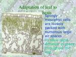 adaptation of leaf to photosynthesis62