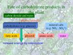 fate of carbohydrate products in the plant28