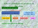 fate of carbohydrate products in the plant29