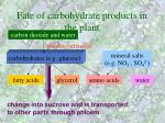 fate of carbohydrate products in the plant30