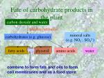fate of carbohydrate products in the plant31
