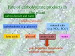 fate of carbohydrate products in the plant32