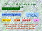 overview of nutrition in green plants