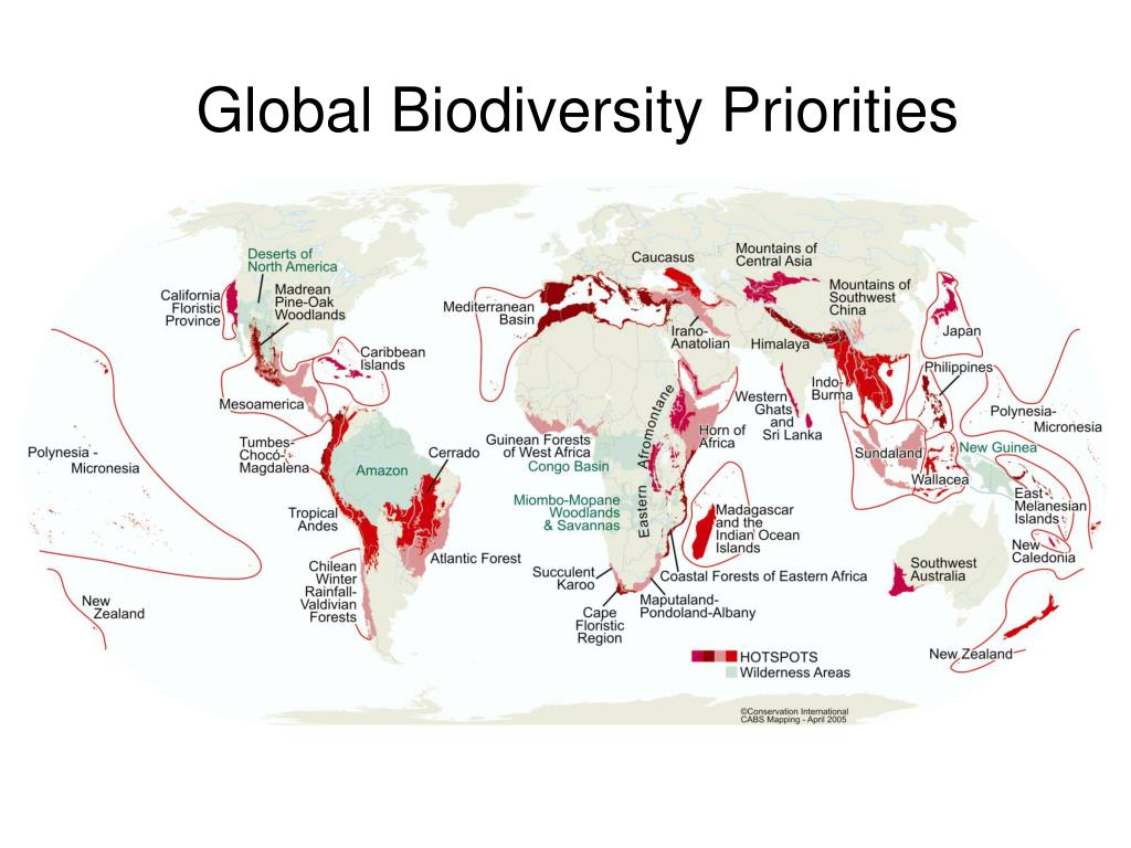 Global Biodiversity Priorities
