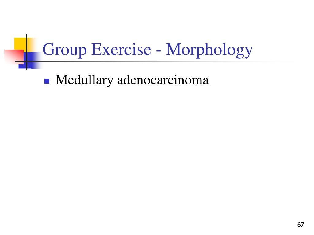 Group Exercise - Morphology