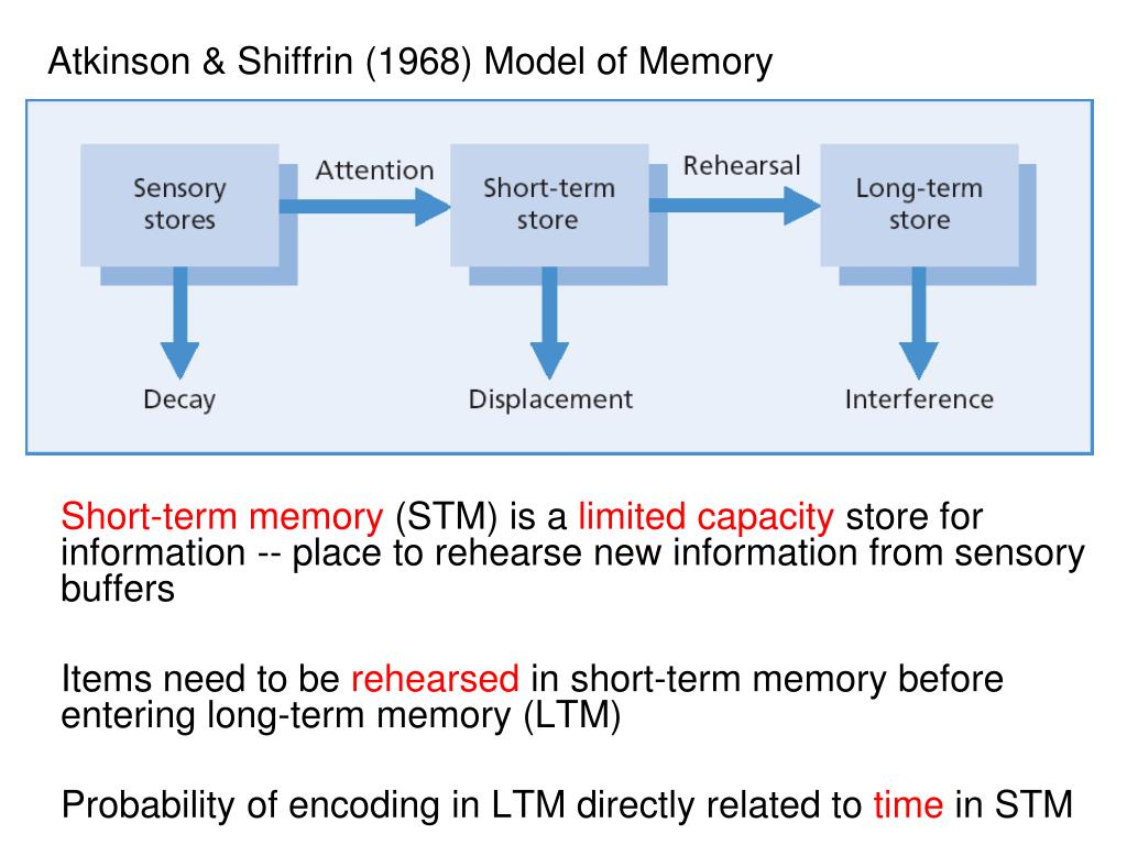atkinson shiffrin memory model The model of human memory proposed in 1968 by atkinson and shiffrin has the distinction of having revolutionized information-processing theory it catapulated a whole generation of cognitive psychologists into sustained research programs that continue to be productive year after year.
