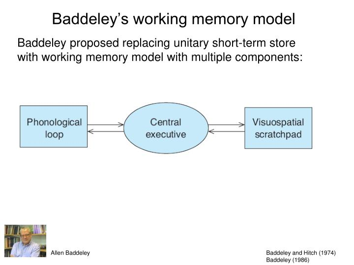 the working memory model Working memory, previously referred to as short-term memory, refers to the memory that one is currently processing this memory lasts for less than a minute and is limited in capacity in an attempt to better understand working memory, alan baddeley developed the working memory approach.