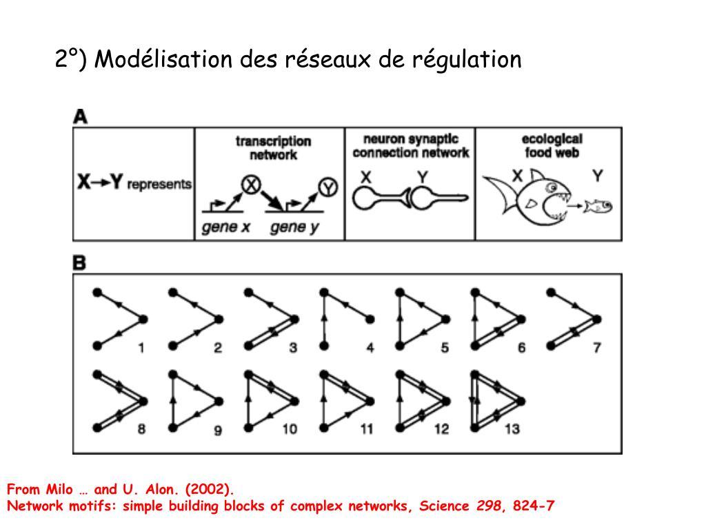 2°) Modélisation des réseaux de régulation