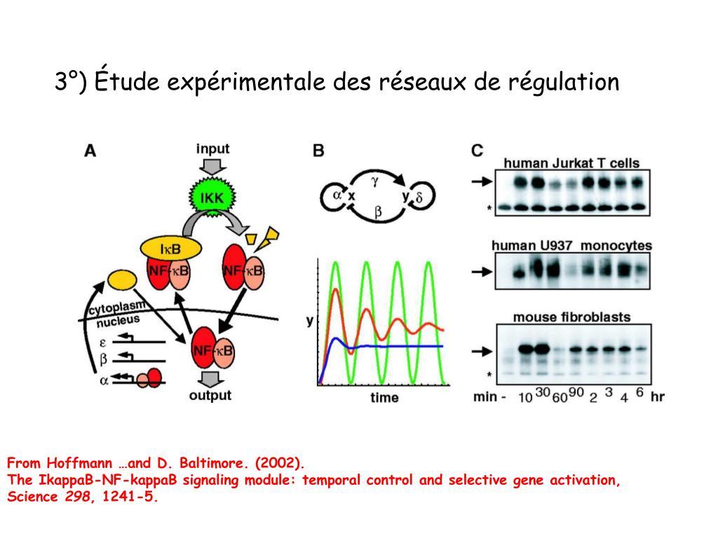 3°) Étude expérimentale des réseaux de régulation