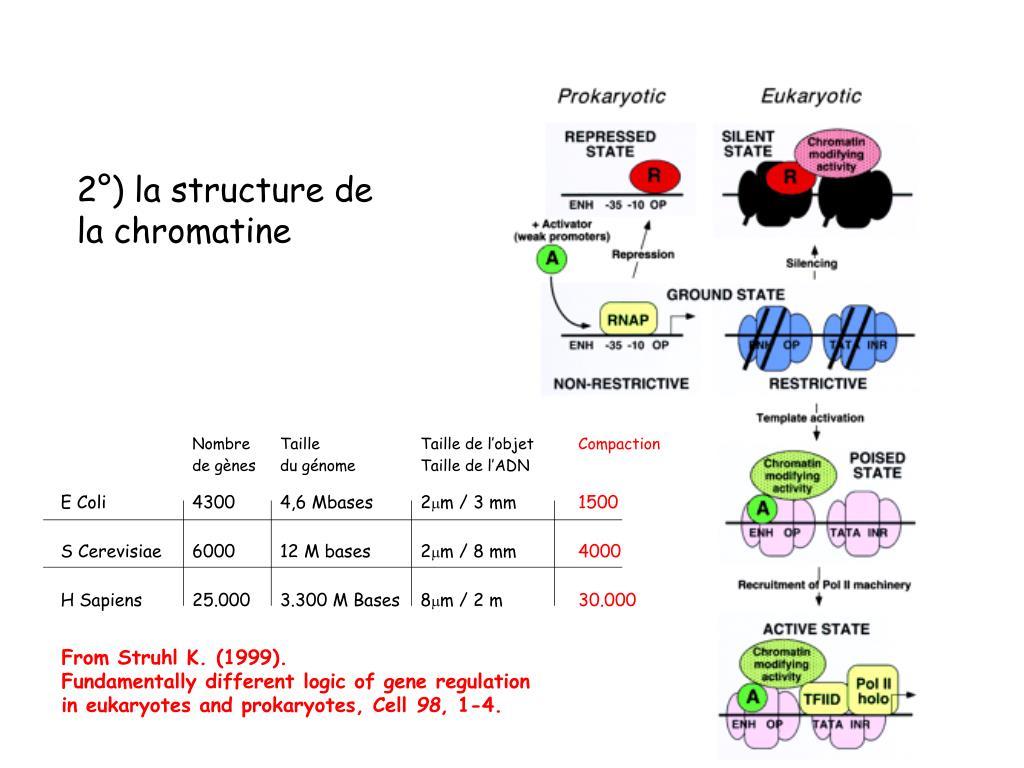 2°) la structure de