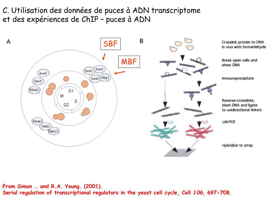 C. Utilisation des données de puces à ADN transcriptome
