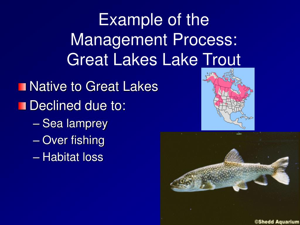Example of the Management Process:  Great Lakes Lake Trout