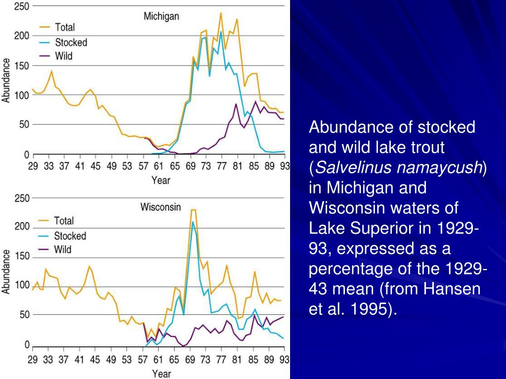 Abundance of stocked and wild lake trout (