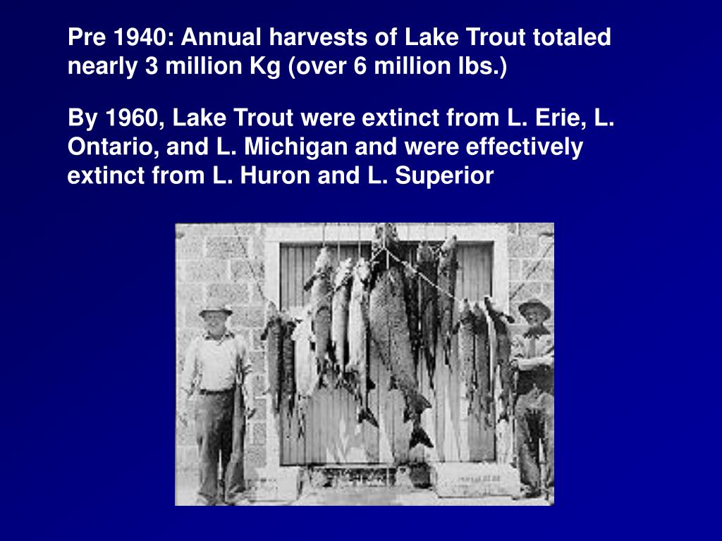 Pre 1940: Annual harvests of Lake Trout totaled nearly 3 million Kg (over 6 million lbs.)