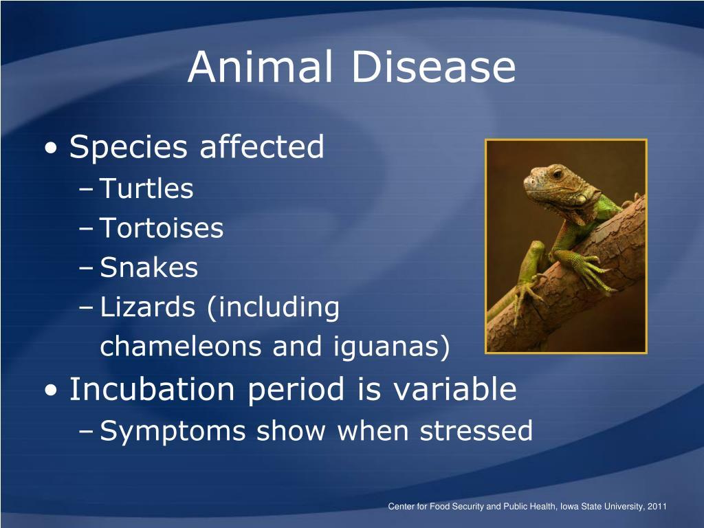 Animal Disease