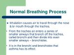 normal breathing process