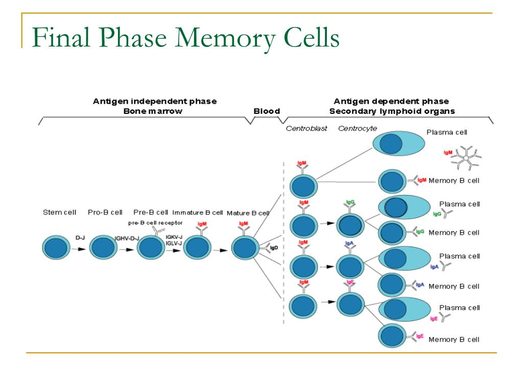 Final Phase Memory Cells